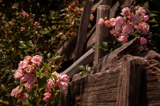 Garten Blumen Hotel zur Post in Alpbach